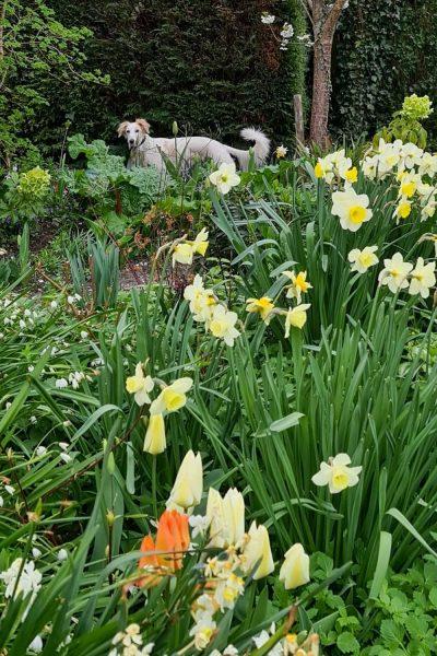 Spring garden display