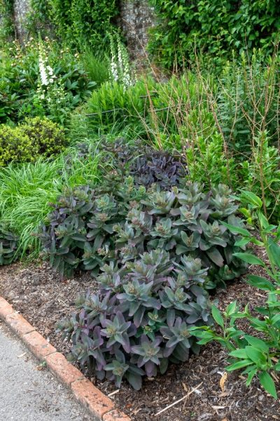 How to plant your garden borders