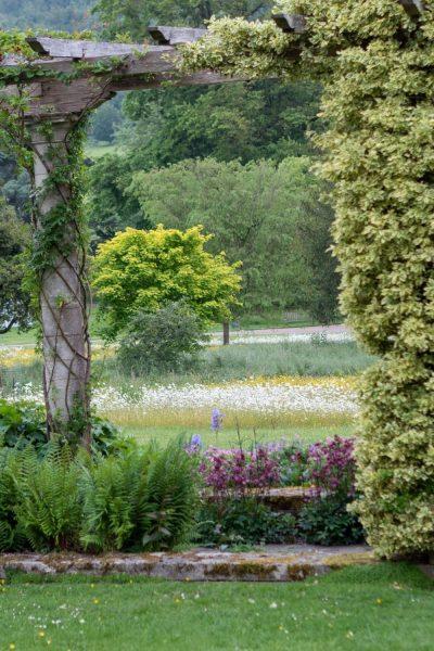 Meadow planting in West Dean Sussex