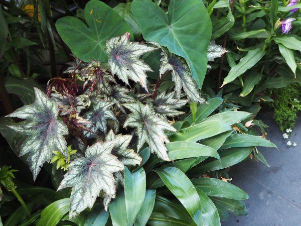 Choose interesting plants in a garden for entertaining