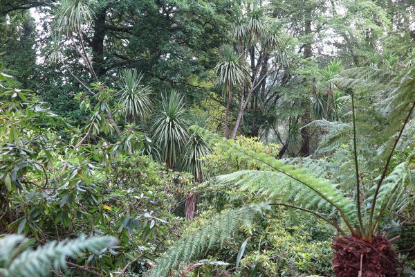 Cordylines, tree ferns combine for an exotic look