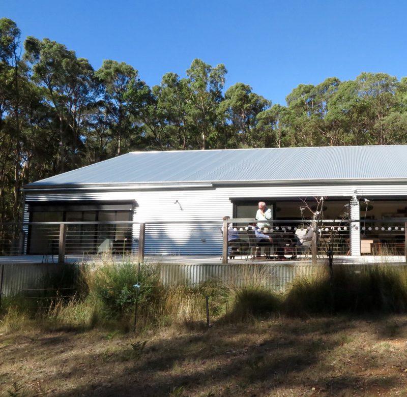 Eucalyptus as a natural dye