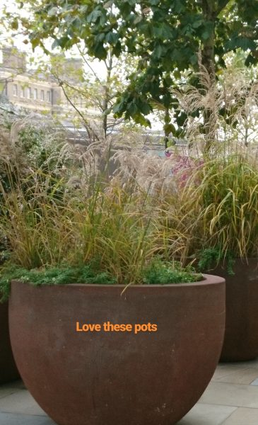 Winter grasses in pots near Kings Cross station