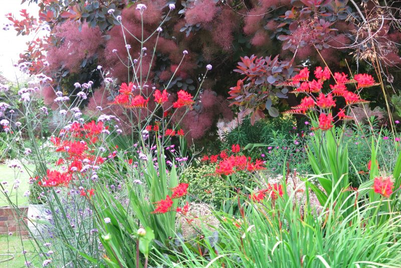 How to use vibrant colour in your garden