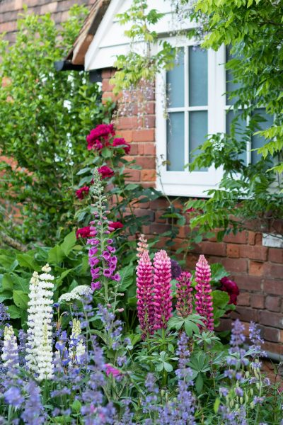 Sue Oriel's cottage garden