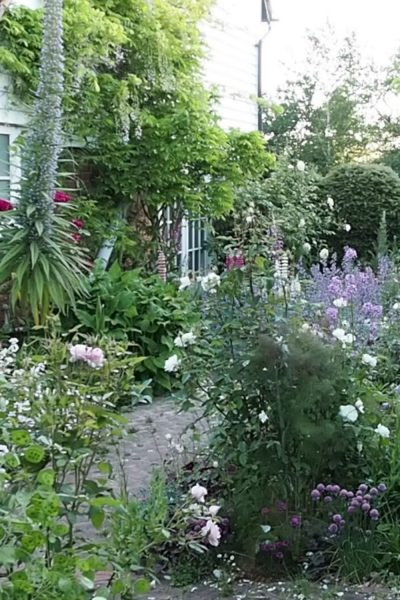 Cottage garden has no lawn