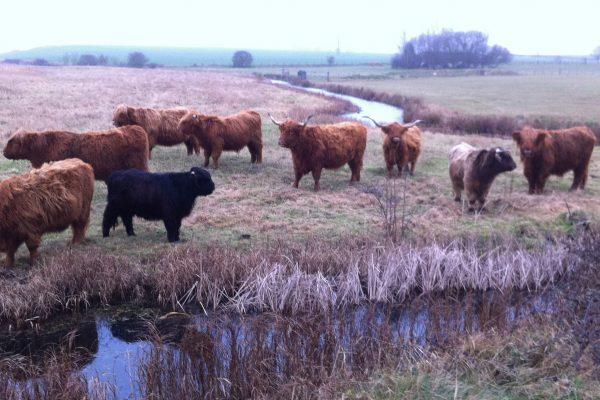 Cow compost - better for shrubs?