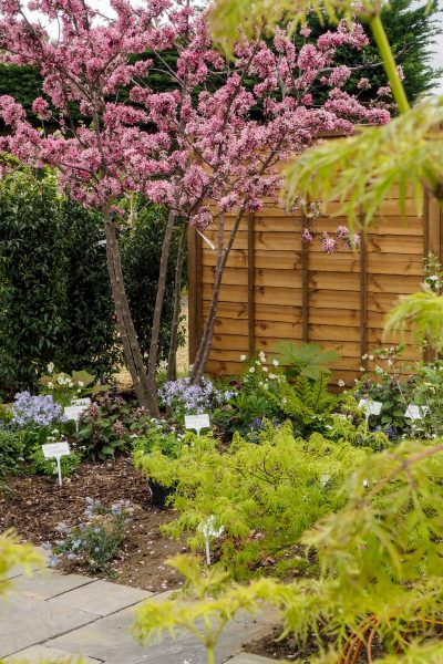 Plant trends 2019 - trees for small gardens
