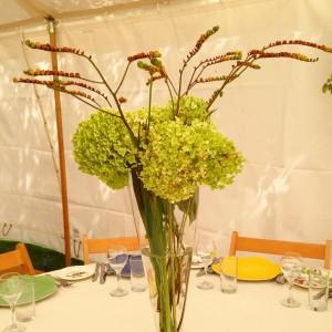 Hydrangea Annabelle and crocosmia seedheads