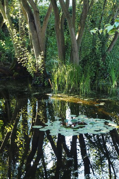 Reflections on garden ponds #backyard 'gardendesign