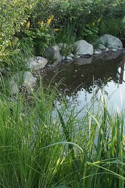 Naturalistic round ponds are back