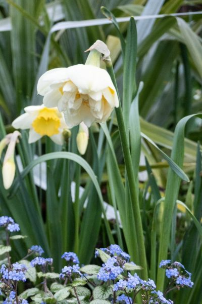 When is it too late to plant spring bulbs
