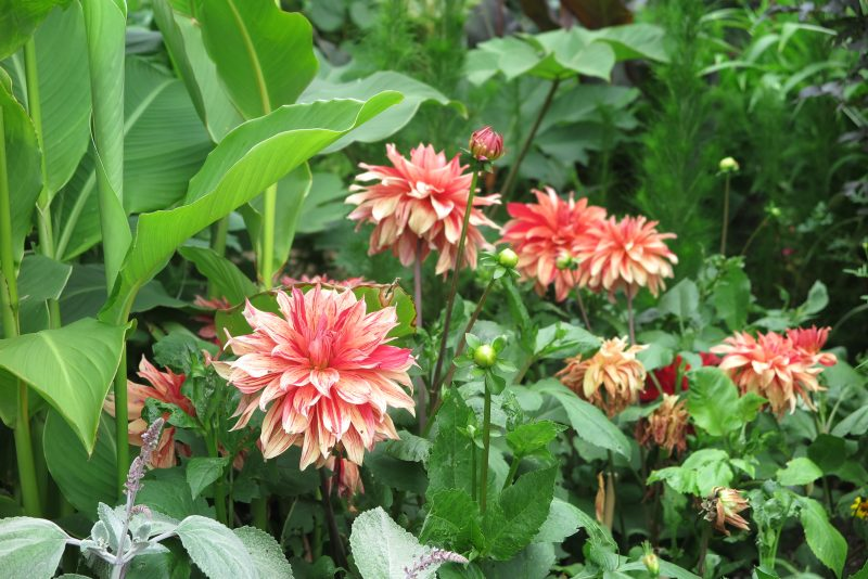 Exotic new dahlia trends