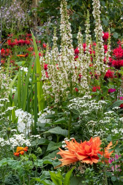 Tightly packed plants in a herbaceous border