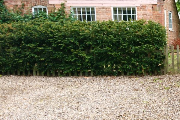 A well-planted hedge.