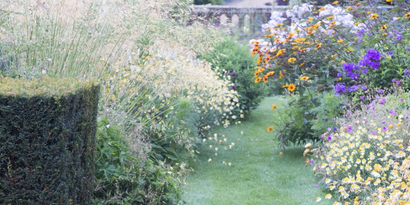 How to improve your garden photography even if you hate tech…