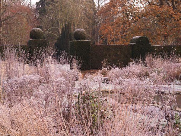 Frost in the winter garden