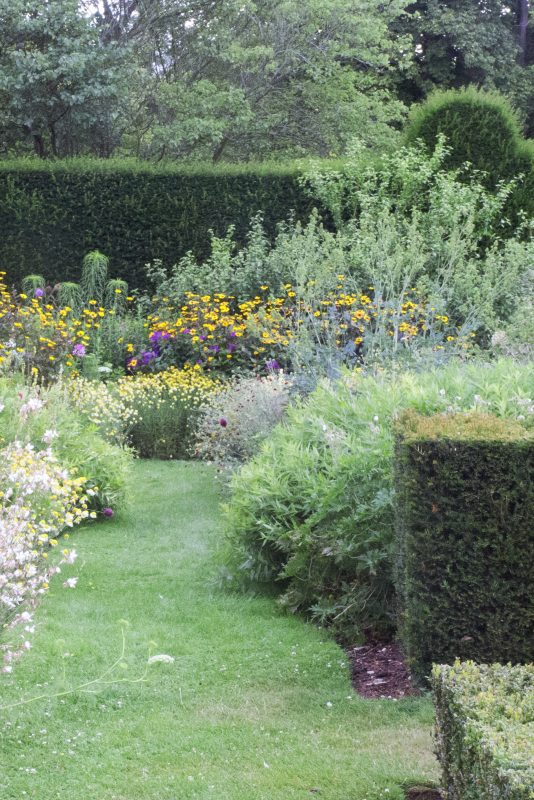 Which hedge is right for my garden? - The Middle-Sized Garden