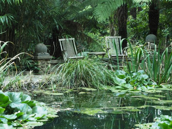 Create a jungle effect with lots of planting #gardenponds #gardendesign