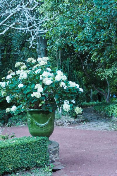 Use hydrangeas as a statement plant #gardendesign