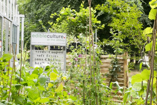 How to create an easy sustainable garden