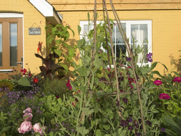Put your vegetable garden in the front of the house.