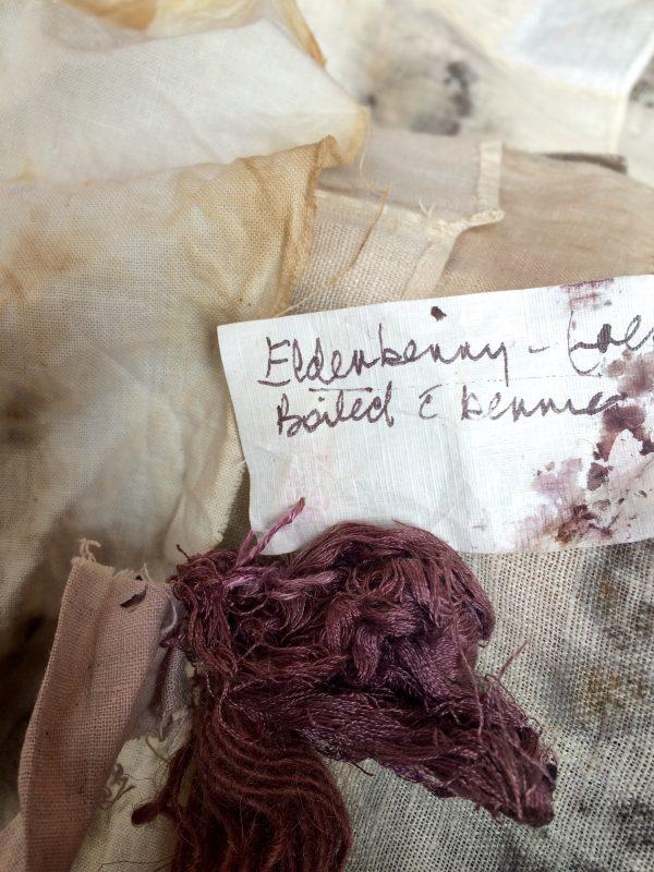 Elderberry plant dye