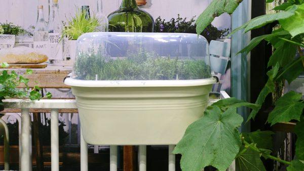 Elho balcony planter with cloche