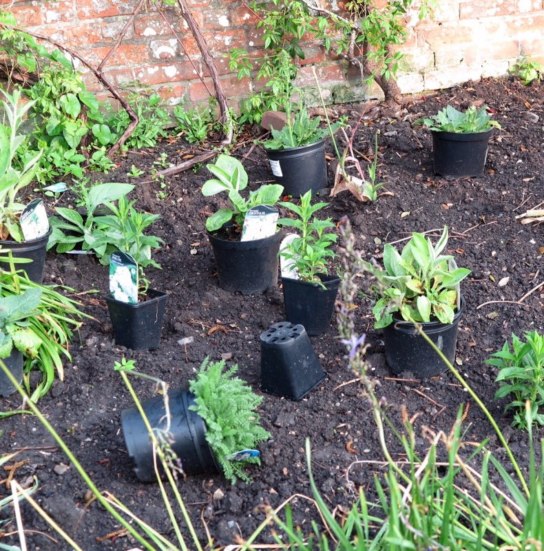 How to plant a border - set the plants out in their pots first