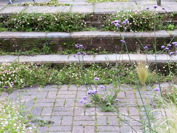 Save money with self-seeded plants