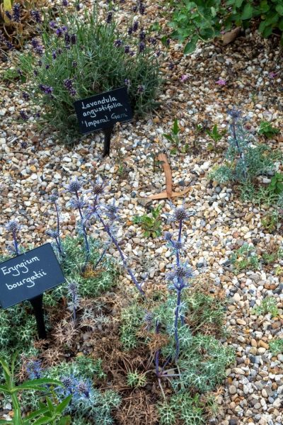 Plants for sale at the Beth Chatto gardens