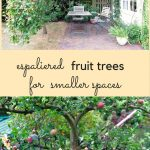 How to grow espaliered fruit trees for your middle-sized garden
