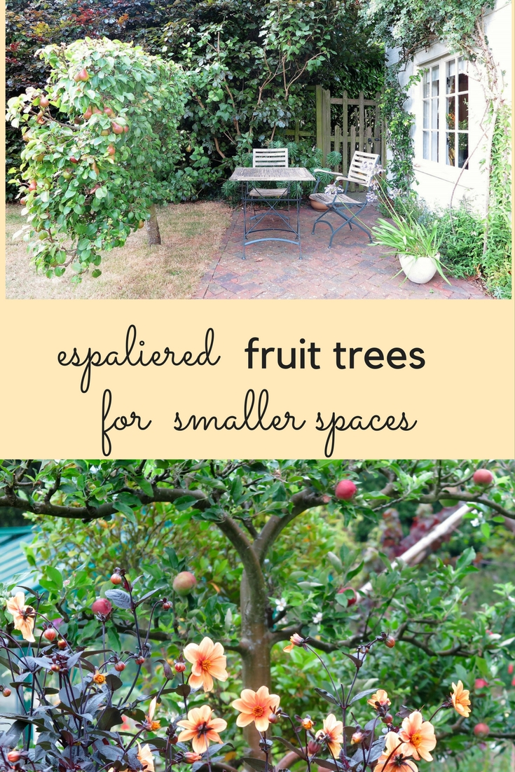 Espaliered fruit trees the perfect solution for small for Trees for small places