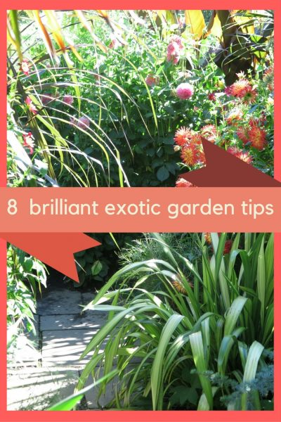 How to create a brilliant exotic garden or border
