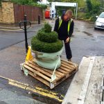 Delivery of spiral topiary