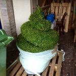 Spiral topiary in garage