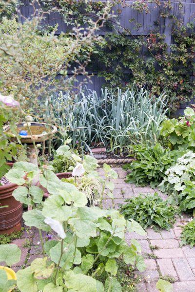 Choose a garden colour theme