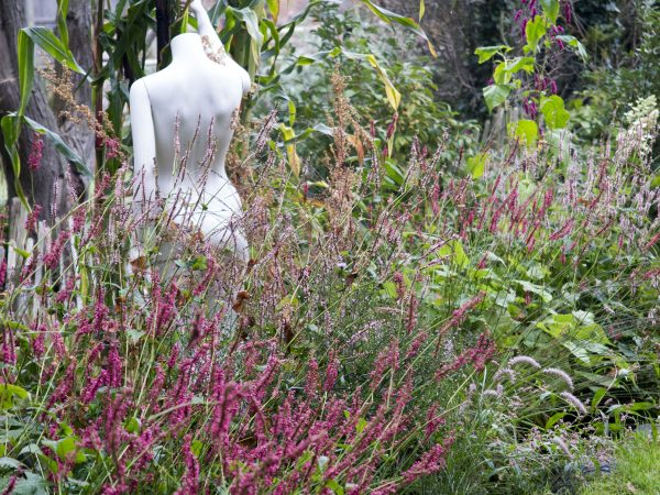 Freegle or Freecycle can make your garden very interesting