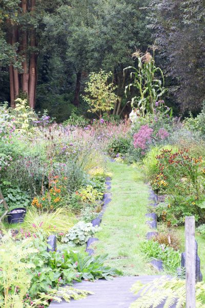 Long thin damp garden