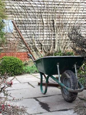 Well-pruned bare stems for good winter shape