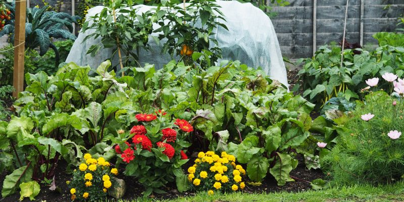 Where is the best place for the vegetable garden?