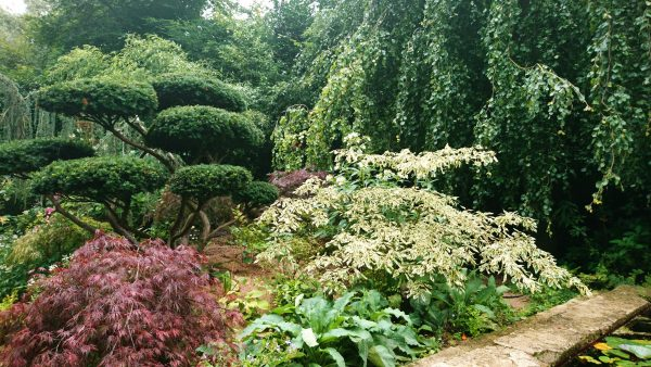 Use foliage shape and colour to define your garden