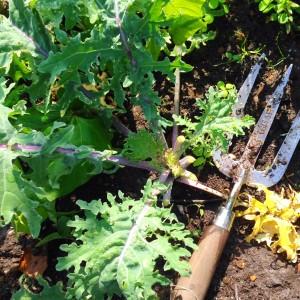 Wilko gardening fork