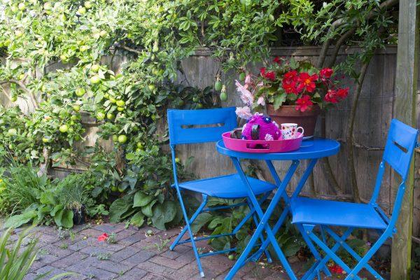 Choose a wildlife hedge for a small garden