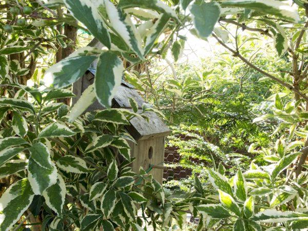 Wildlife hedges for small gardens