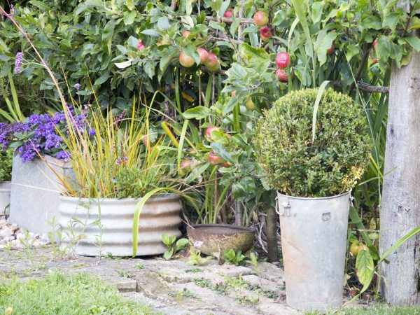 Style your garden with junk shop pots