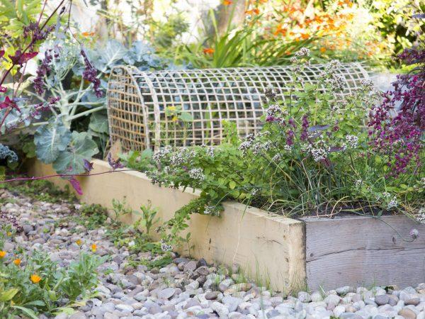 Style your veg garden?