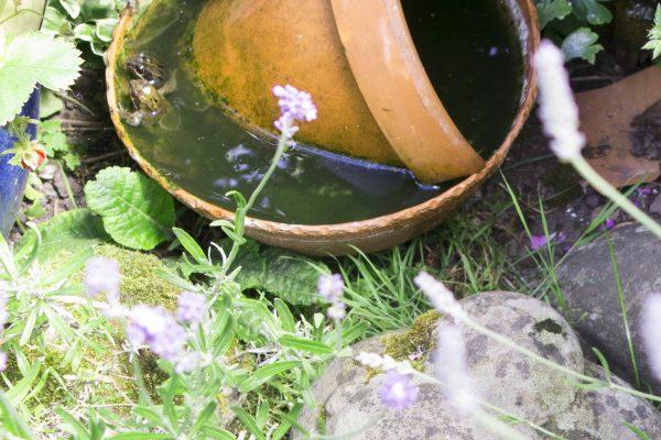 Use a pot as a pond