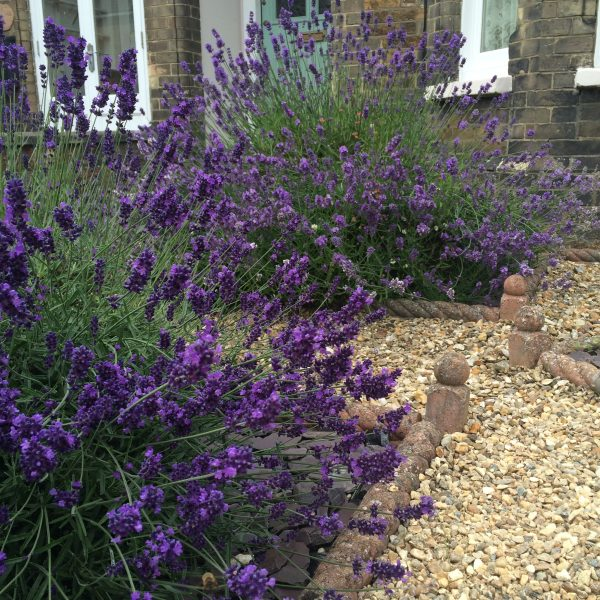 The best front garden ideas - smart, easy and cheap - The ...