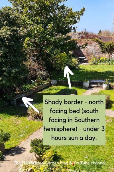 Shady border